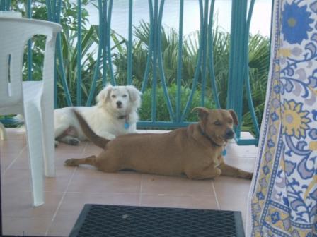 Bozo & Dipsy_Caribbean Dogs