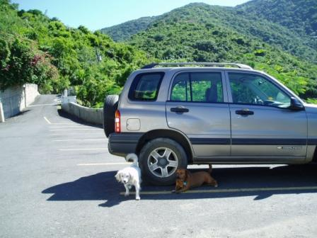 Caribbean Dogs Under Car