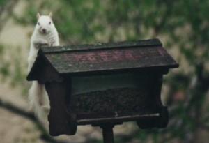Alabaster_white squirrel